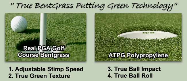 Bent grass putting greens